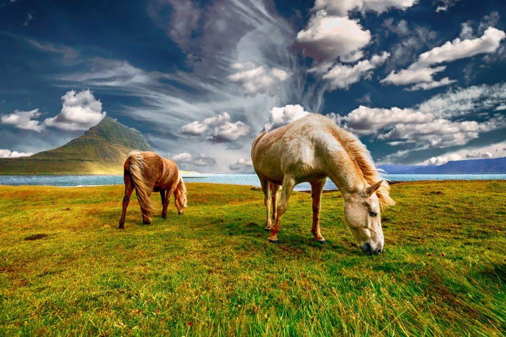 Flamm Wir werden sehen Pferde