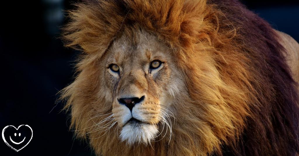 Flamm Einhorn Löwe