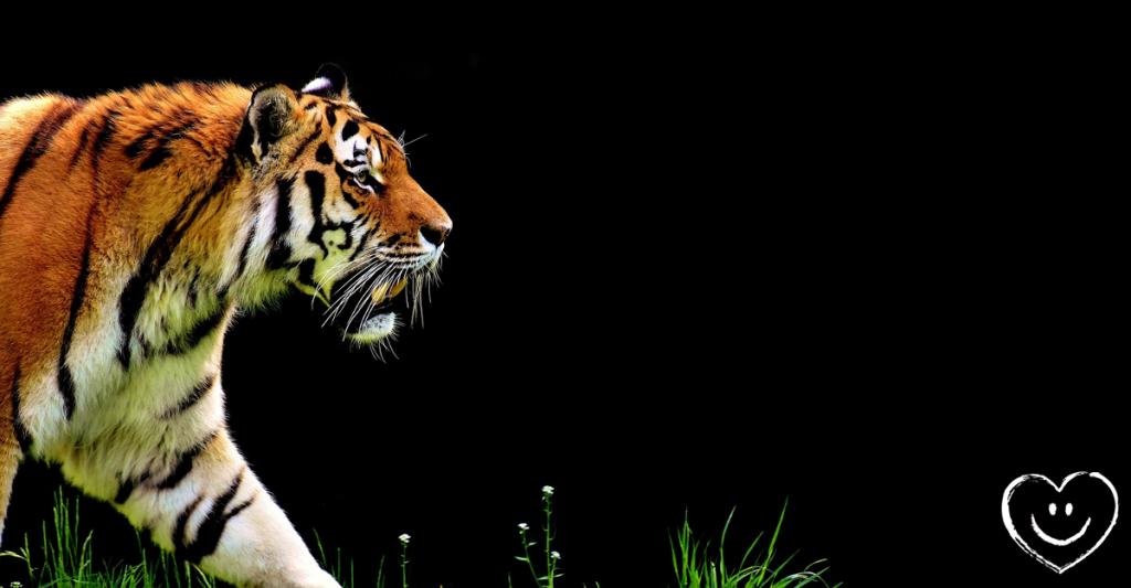 Flamm Einhorn Tiger