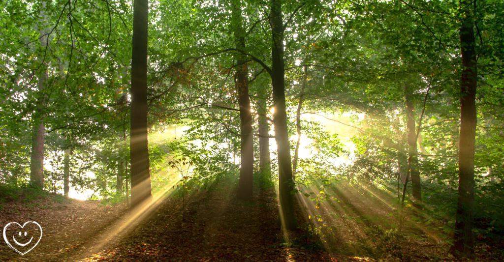 Flamm Weg Wald