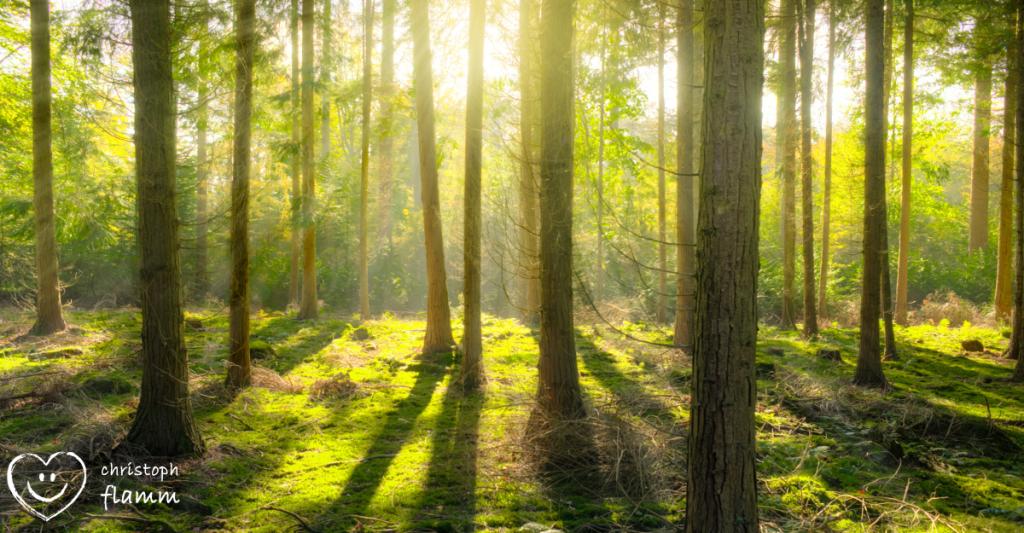 Flamm Entspannung Wald
